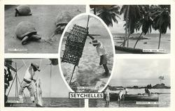 5 insets GIANT TORTOISES/BEACH VIEW,MAHE/TRAP FISHERMAN/GAFFING FISH/FISHERMAN AND PIROQUE
