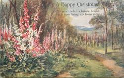 A HAPPY CHRISTMAS  many coloured foxgloves left & back