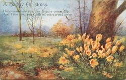 A HAPPY CHRISTMAS   orange croci at base of large tree, right