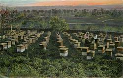 AN AUSTRALIAN BEE FARM