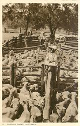 YARDING SHEEP