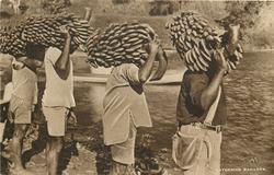 GATHERING BANANAS