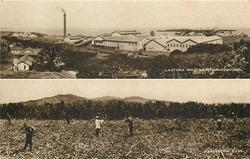 2 insets LAUTOKA MILL AND SURROUNDINGS/HARVESTING CANE
