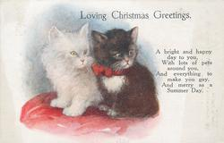 LOVING CHRISTMAS GREETINGS black and white kittens