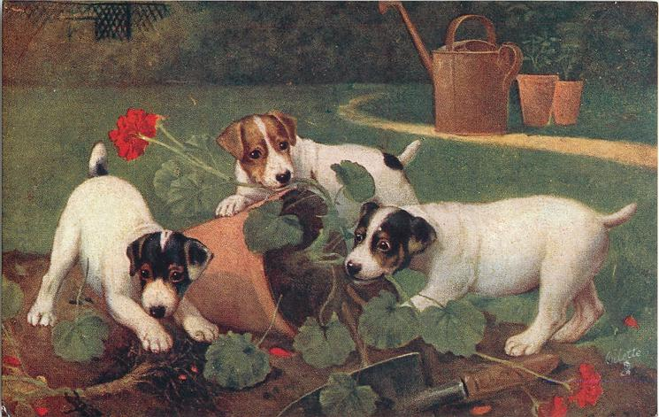 three puppies are in the garden, tearing the flowers out of the pots