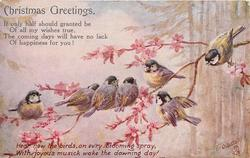 CHRISTMAS GREETINGS  seven blue-tits on branch with pink flowers