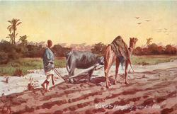 PLOUGHING NEAR THE NILE