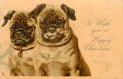 TO WISH YOU A HAPPY CHRISTMAS or WITH BEST WISHES FOR A HAPPY NEW YEAR  two pugs