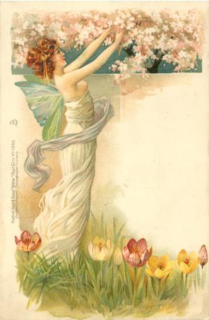 fairy in white, facing right reaching up to blossom, tulips below