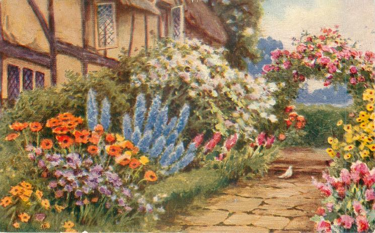 garden in front of thatched cottage, path with paving stones leading across front, towards arch of pink roses, pigeon on path