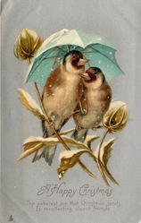 A HAPPY CHRISTMAS  two chaffinches on twigs under blue/green umbrella, silver background