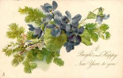 A BRIGHT AND HAPPY NEW YEAR TO YOU.  blue violets centre, conifer branch behind