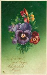 A BRIGHT AND HAPPY CHRISTMAS TO YOU. pansies