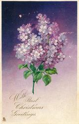 WITH BEST CHRISTMAS GREETINGS.  spray of mauve lilac, purple background