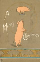 A MERRY CHRISTMAS  pig in balances on plate supported on other pigs nose, line up of pigs along bottom of card