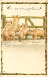 UNE NOMBREUSE FAMILLE  four pigs, three look through gate, birchwood surround