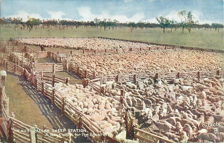 A DAY'S WORK FOR THE SHEARERS