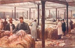 WOOL SORTING AND CLASSING