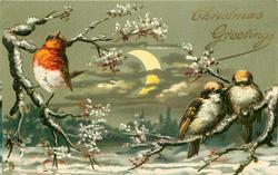CHRISTMAS GREETINGS  one robin and two sparrows in snow scene partial moon