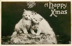 A HAPPY CHRISTMAS  UNDER THE MISTLETOE  two cats