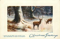 CHRISTMAS GREETINGS  two stags, trees