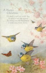 A HAPPY CHRISTMAS    five blue-tits & butterfly