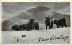 XMAS GREETINGS  highland cattle in snow