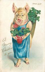 A MERRY CHRISTMAS TO YOU, GOOD LUCK  pig standing up holding four leaf red clover in pot