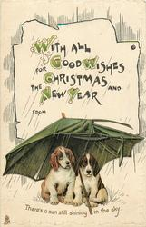 WITH ALL GOOD WISHES FOR CHRISTMAS AND THE NEW YEAR  two sad dogs shelter under umbrella