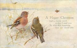 A HAPPY CHRISTMAS  two chaffinches
