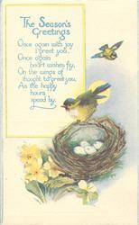 THE SEASON'S GREETINGS  nest, four eggs, two blue-tits, primroses