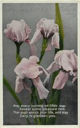 THE SEASONS GREETINGS  iris