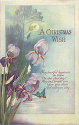 A CHRISTMAS WISH  iris, moon & trees behind