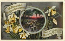 A PEACEFUL HAPPY CHRISTMAS  sheep, daffodils around