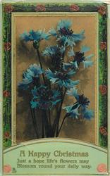 A HAPPY CHRISTMAS  blue cornflowers
