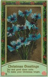 CHRISTMAS GREETINGS  blue cornflowers