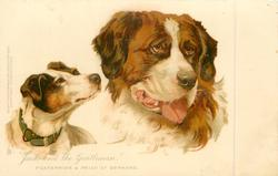 """JACK AND THE GENTLEMAN""  FOX TERRIER & PRIZE ST. BERNARD"