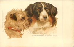 """TWA SCOTCH DOGS""  SCOTCH TERRIER & SCOTCH COLLIE"