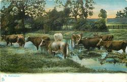 """""""A REFRESHER.""""  cows"""