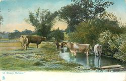 """A SHADY RETREAT.""  cows"