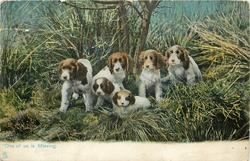 """ONE OF US IS MISSING.""  fox-hound puppies"