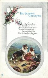 THE SEASON'S GREETINGS  2 collies