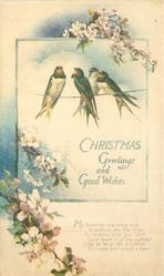 CHRISTMAS GREETINGS AND GOOD WISHES four swallows in insert, blossom above & below