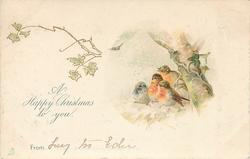A HAPPY CHRISTMAS TO YOU  FROM  four birds on stone fence, three have red breasts, tree right