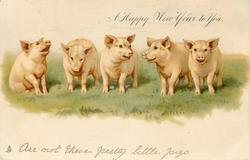 A HAPPY NEW YEAR TO YOU  five pigs in a line on grass