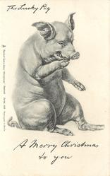 A MERRY CHRISTMAS TO YOU  pig sitting on haunches