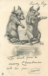 TO WISH YOU A MERRY CHRISTMAS  two pigs on hind legs, face right
