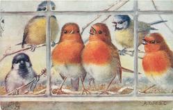 CHRISTMAS GREETINGS  three robins, two bluetits & sparrow sing & look into house through window