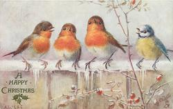 CHRISTMAS GREETINGS or A HAPPY CHRISTMAS or SOUHAITS SINCERES  three robins & bluetit on snowy fence