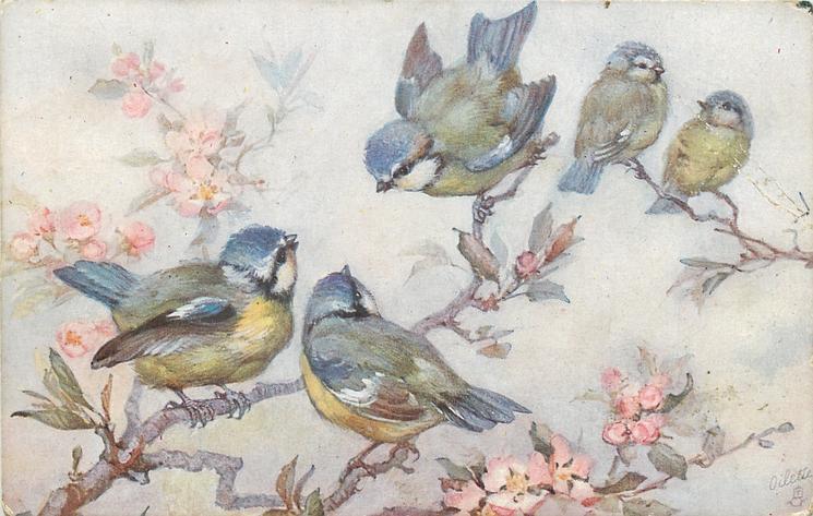 five blue/yellow/white birds on cherry blossom tree - TuckDB